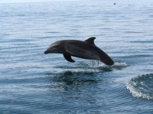 Dolphin Watching Tour Manuel Antonio Costa Rica